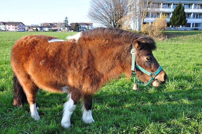 Bring it Back: Ponies