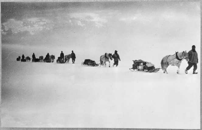 Ponies pulling sleds in the Antarctic - Photograph taken by Captain Robert Falcon Scott. Kinsey, Joseph James (Sir), 1852-1936 :Photographs relating to Antarctica and mountaineering. Ref: PA1-f-066-05-02. Alexander Turnbull Library, Wellington, New Zealand.